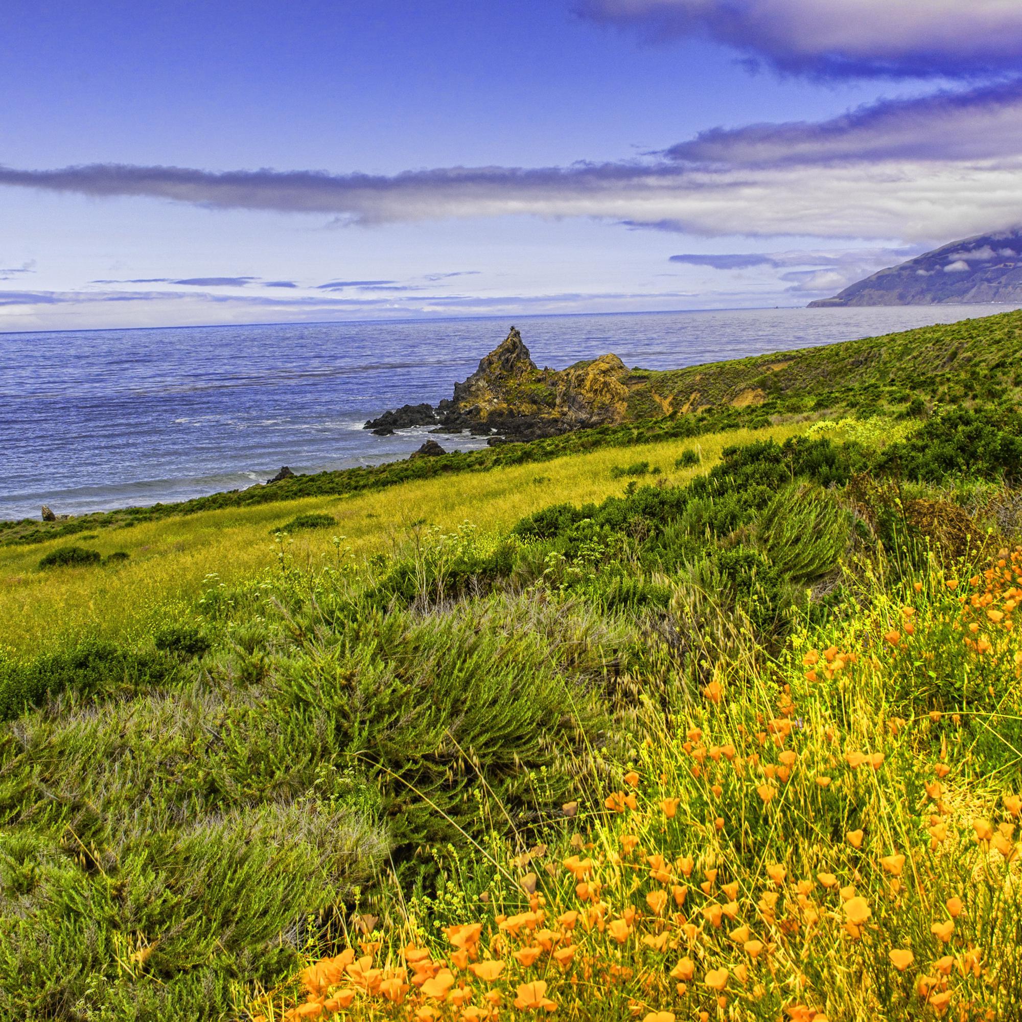 Dan Blackburn Poppies Above the Pacific Ocean Below Big Sur California_MGL9229-Edit