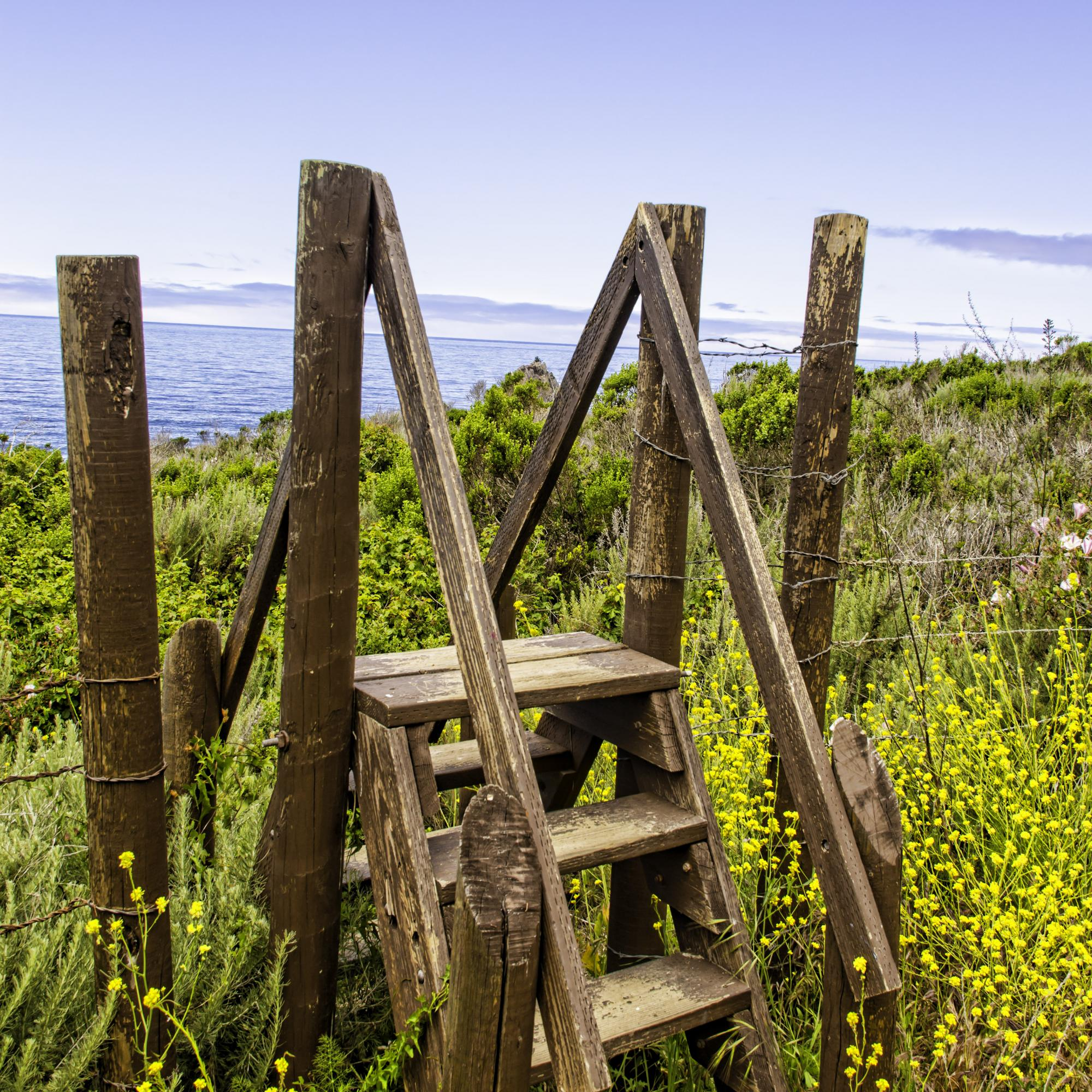 Dan Blackburn Wooden Steps & Wild Mustard South of Big Sur California_MGL9223