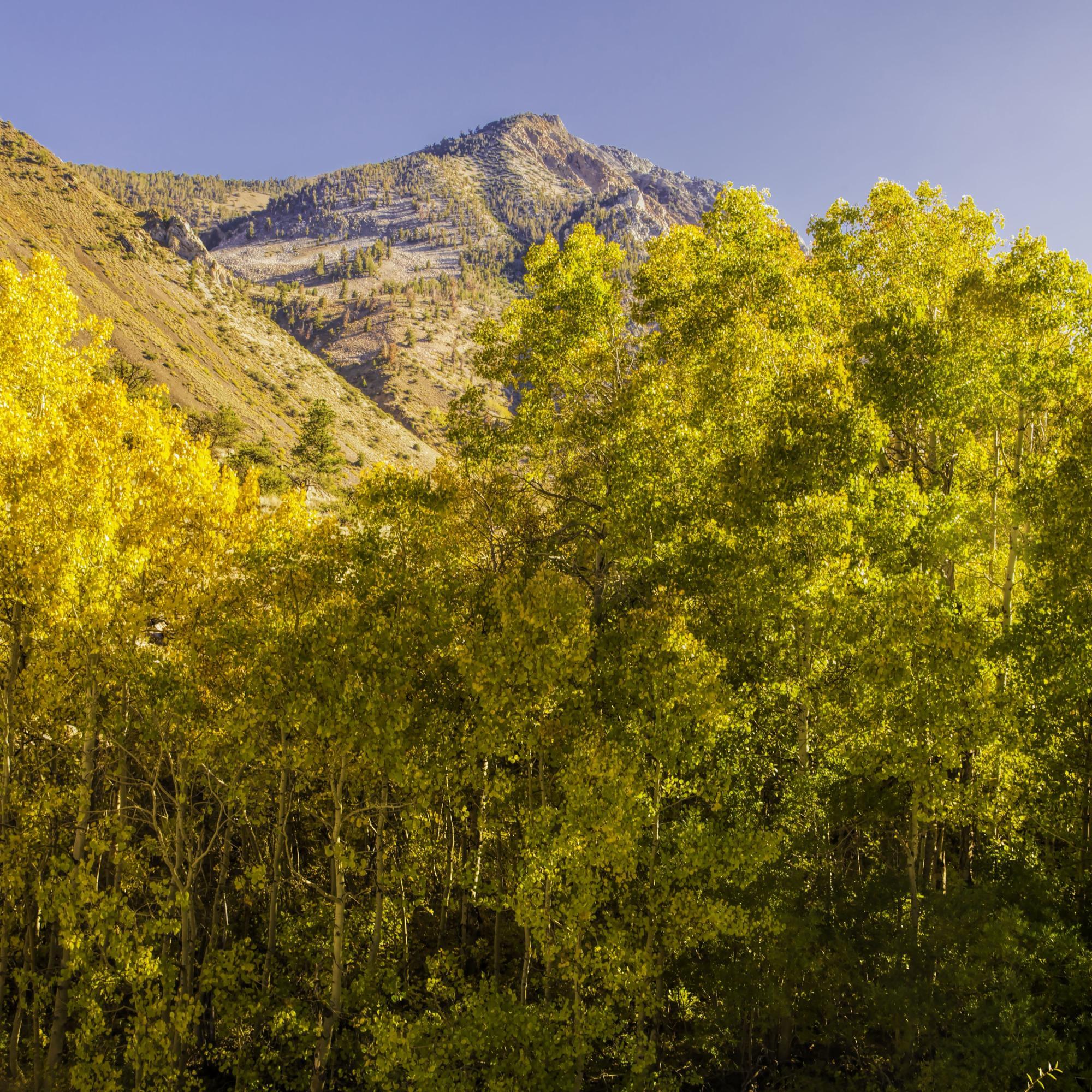 Dan Blackburn Eastern Sierra Fall Color_MGL1246