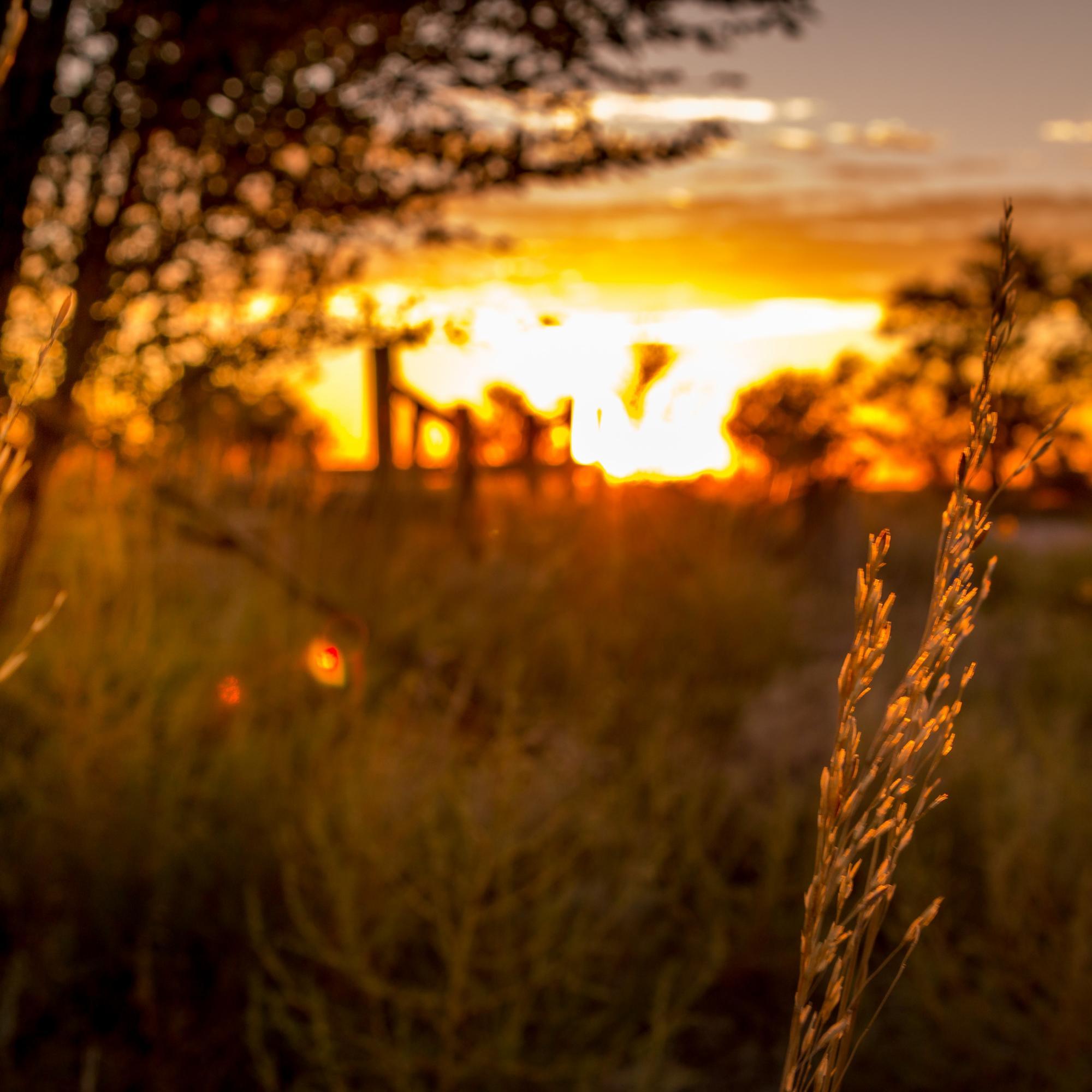 Wyo sunset -  (1)