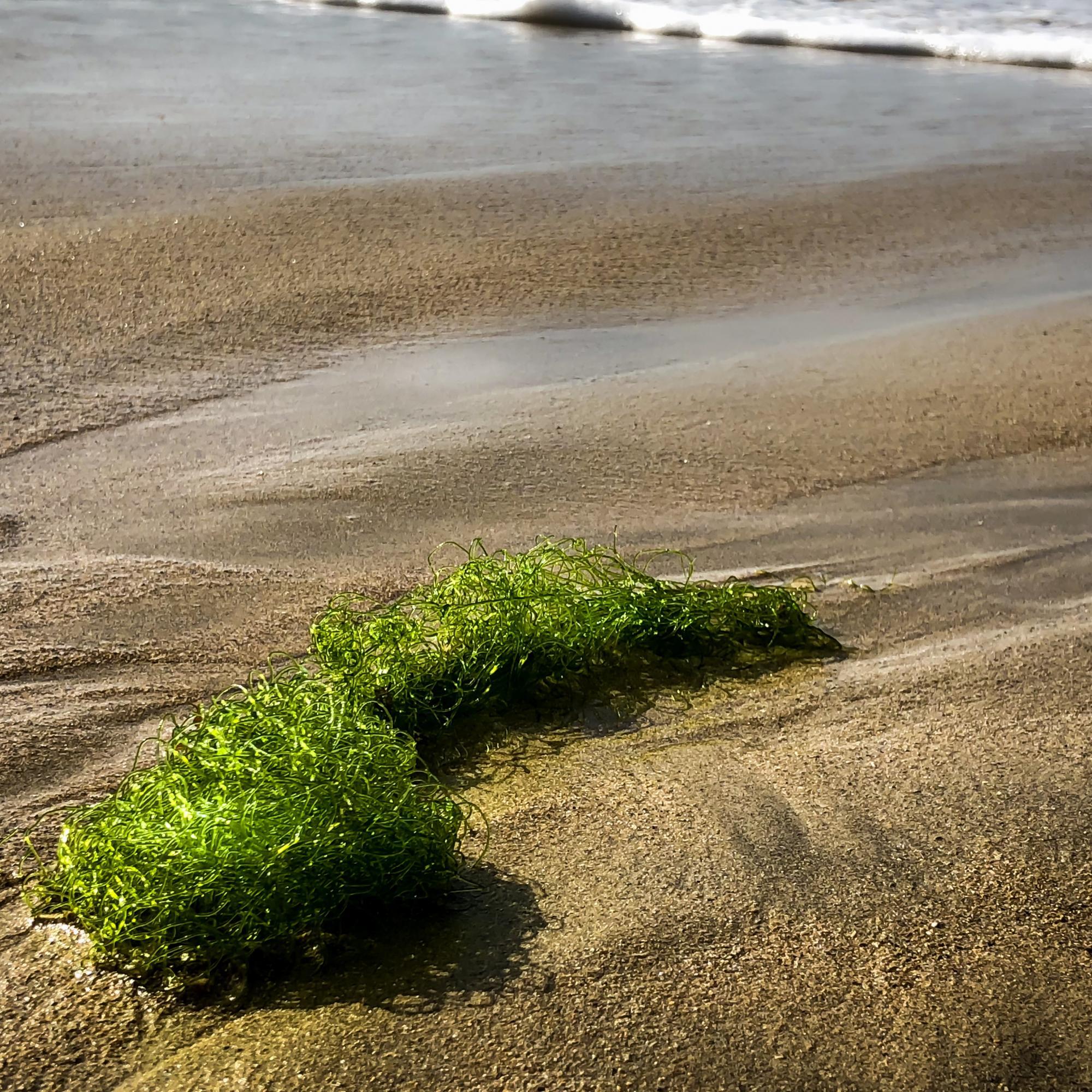 Seaweeds on shore