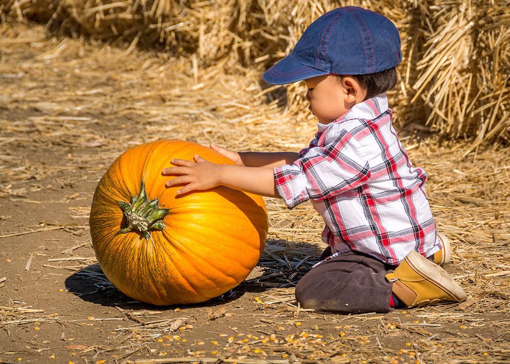 Little boy and his big pumpkin