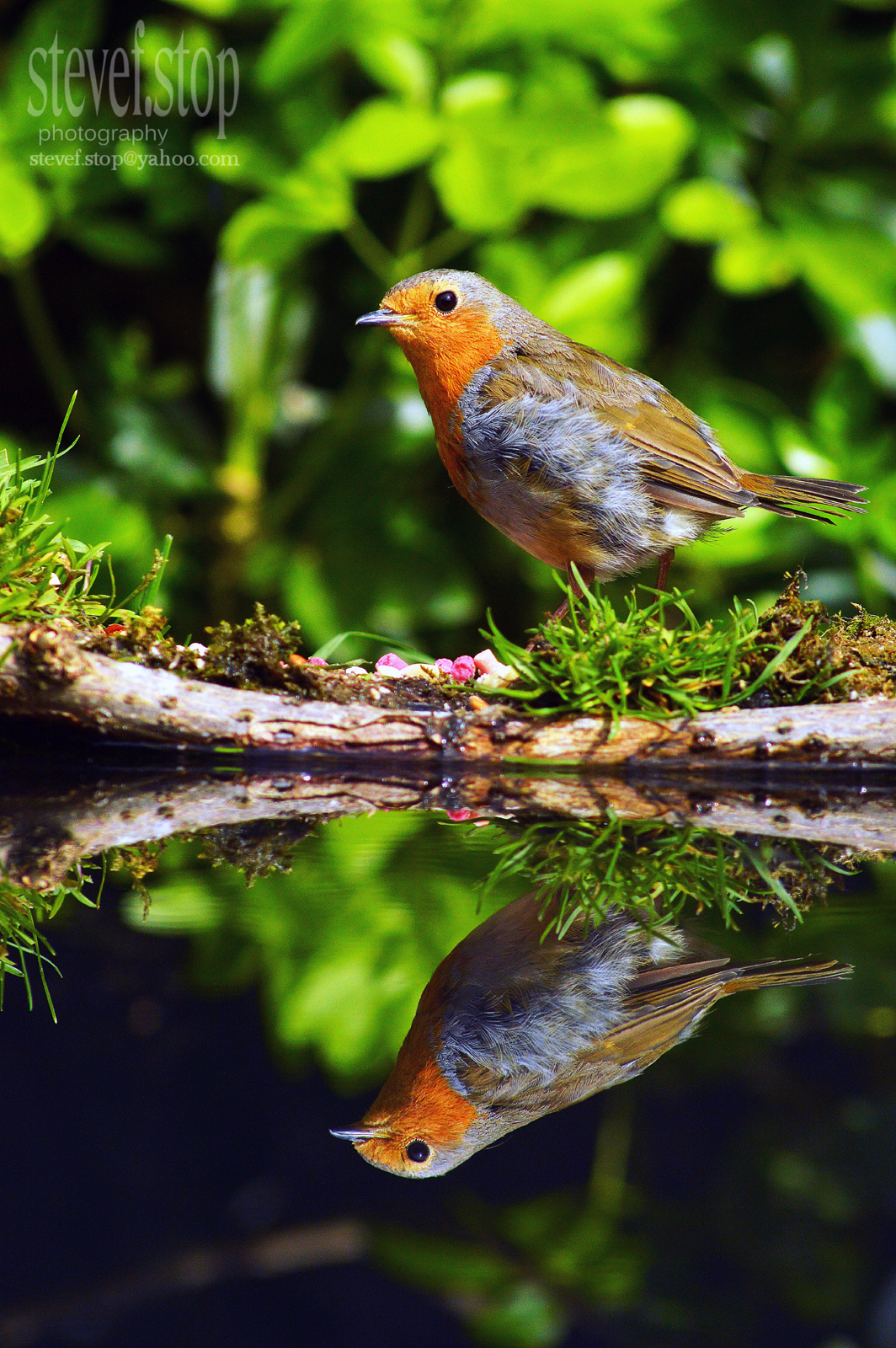 reflected robin