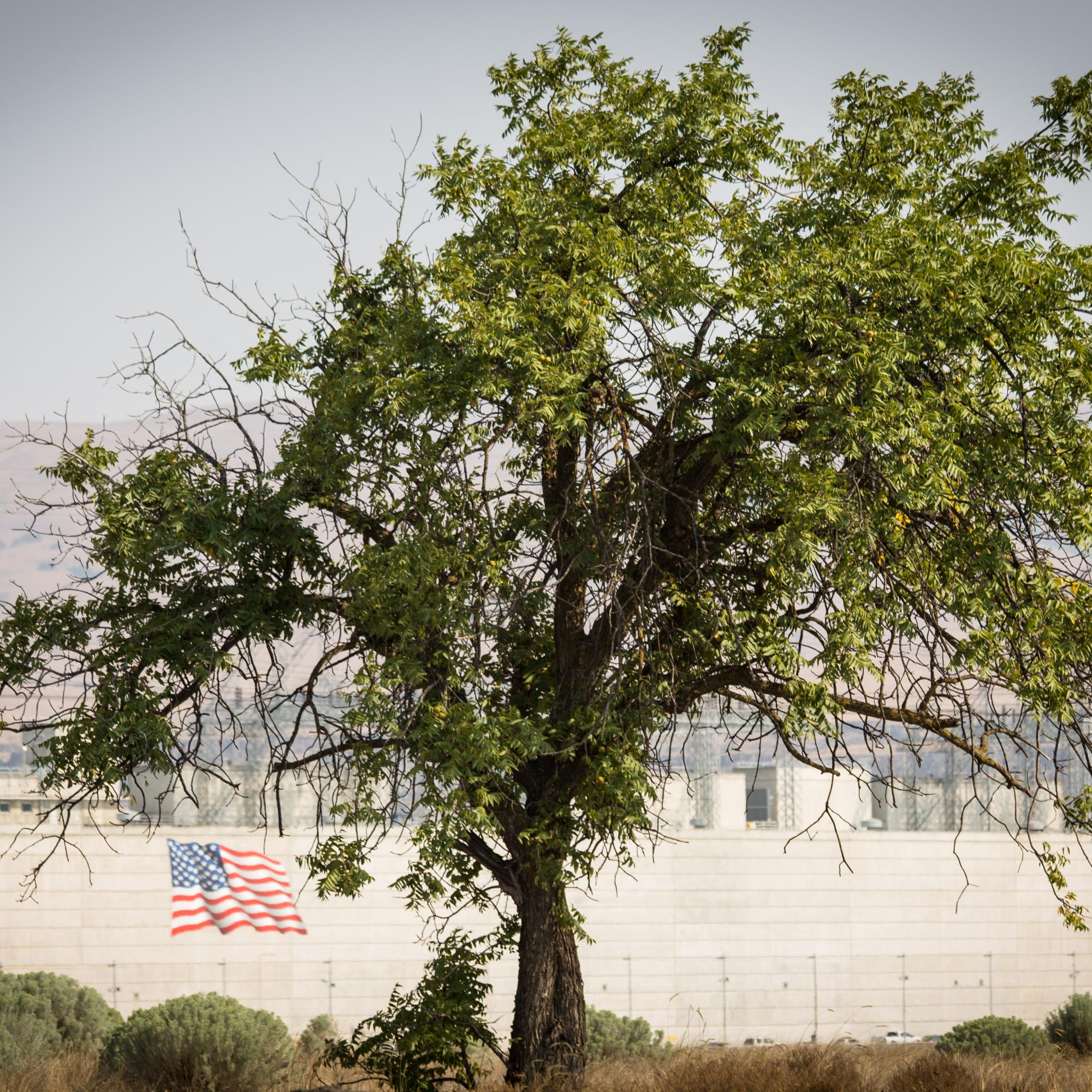 A Flag and a Tree