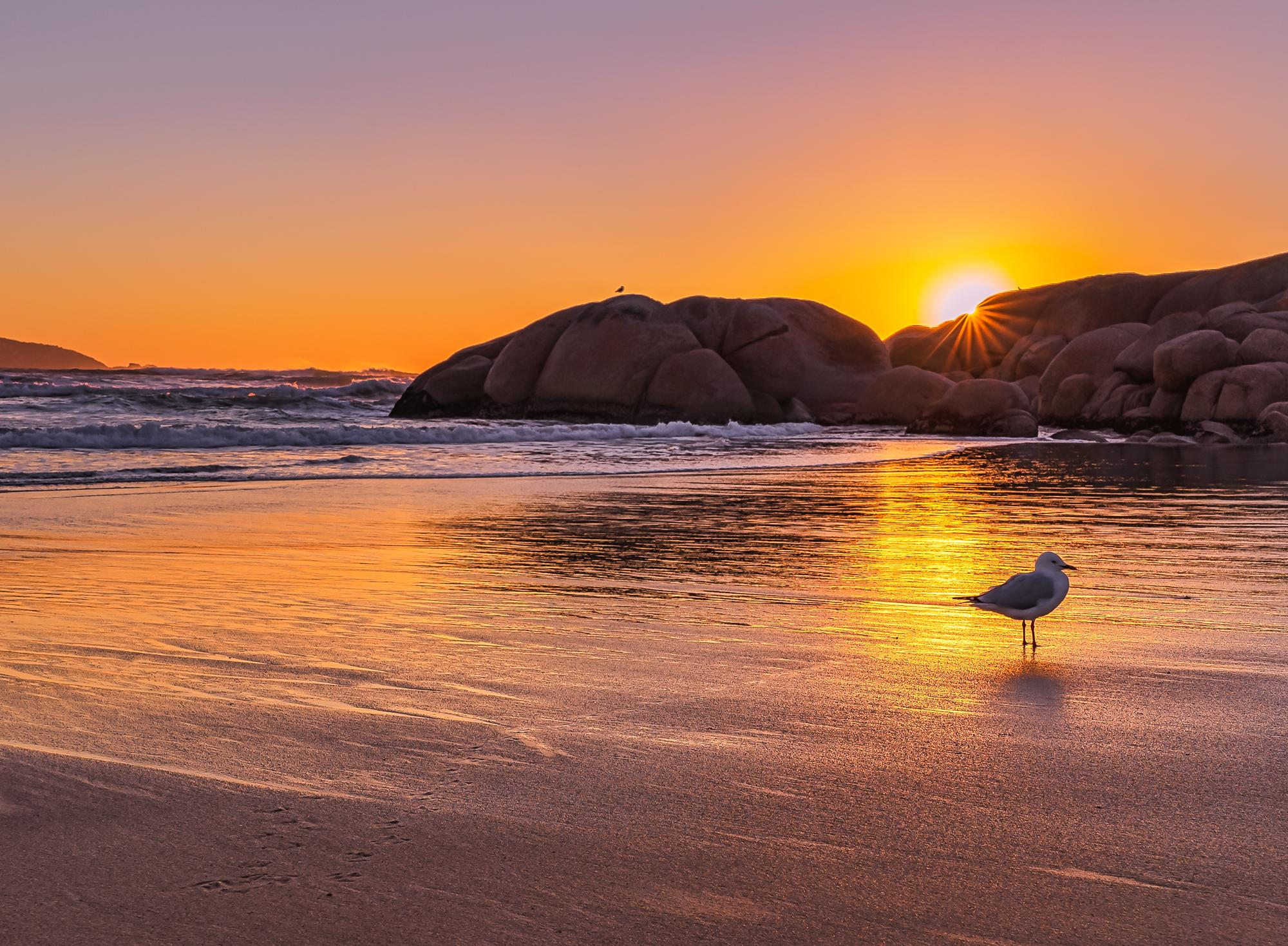 Sea Gull Sunset