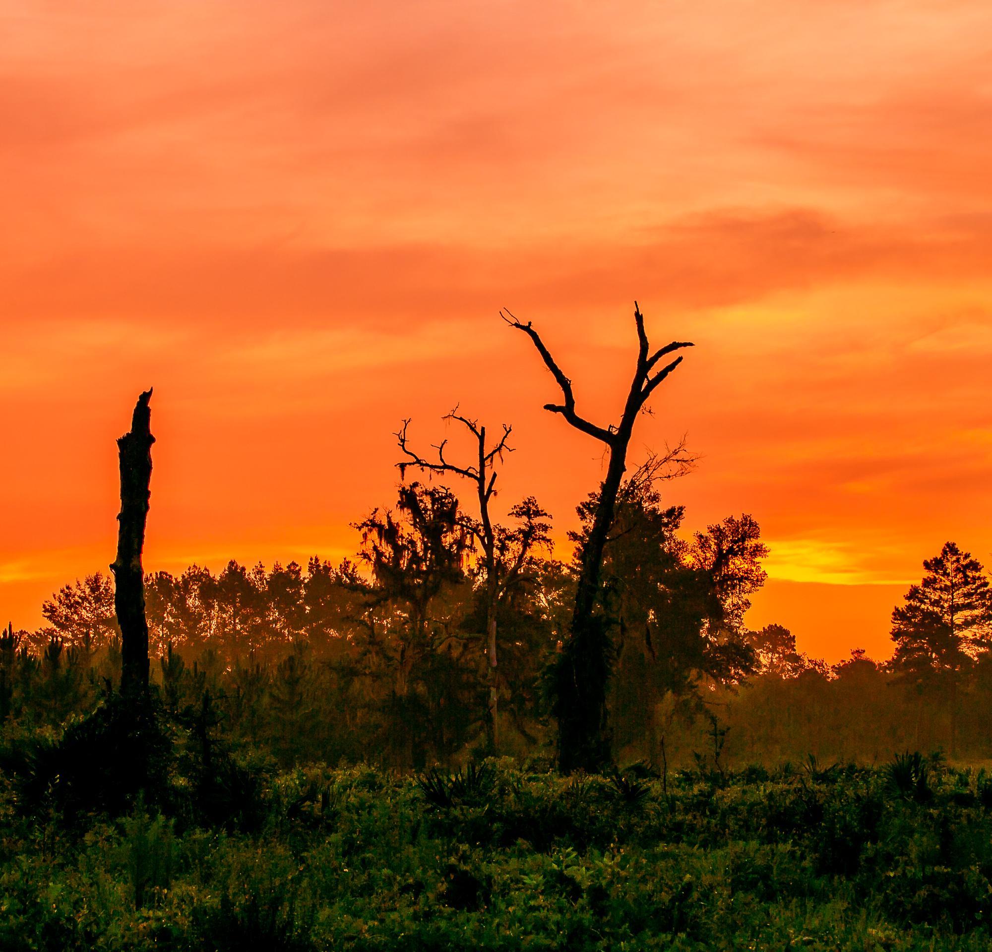 Rural Florida Sunrise #1