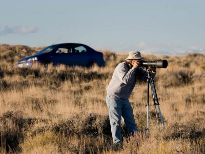 Bird Photography Tip: How to Get Sharp ... image