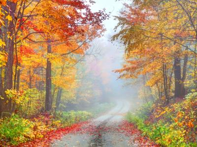 Fall Foliage Photography Tips image