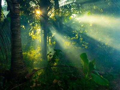 Jungle Photography Tips image