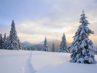 Best Camera Settings for Snowy Landscapes image