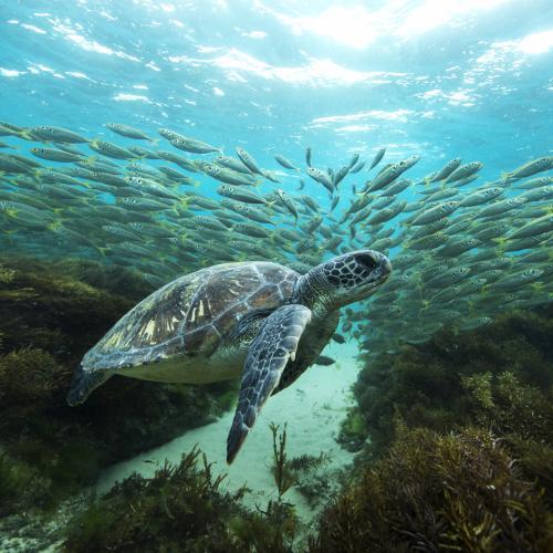 Sea Turtle Wander by SeanScott