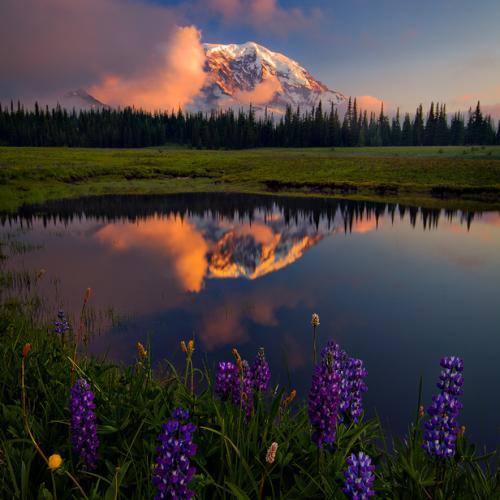 Peaking Flowers at Mt. Rainier by trevorandersonphotography