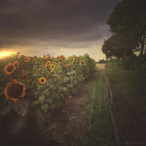 A Little Bit of Sunshine by Mariko Klug