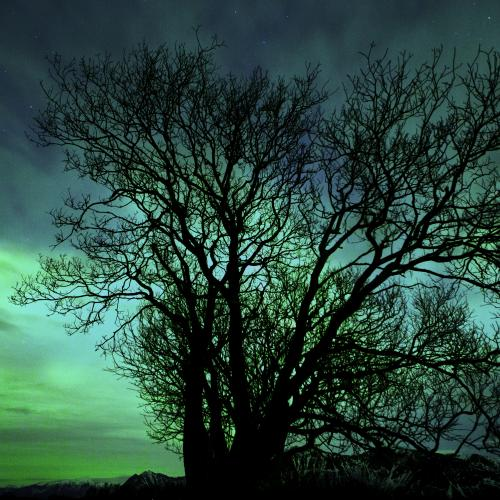 Aurora Borealis Lone Tree by Christopher Michael