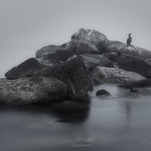GIO_8434-Edit by Gioacchino Rizzo