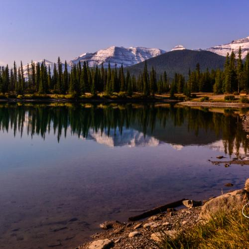Forget Me Not Pond by Gord-O