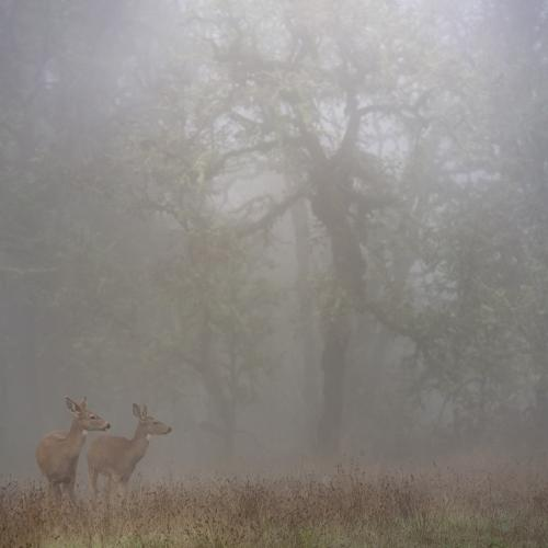 fogtober deer by Kyle