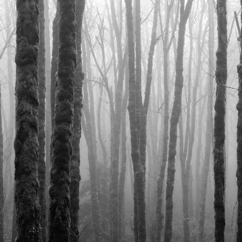 Forest Panoramic by Kyle