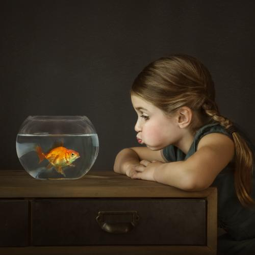 alana-lee-photo-gus the goldfish by ALee