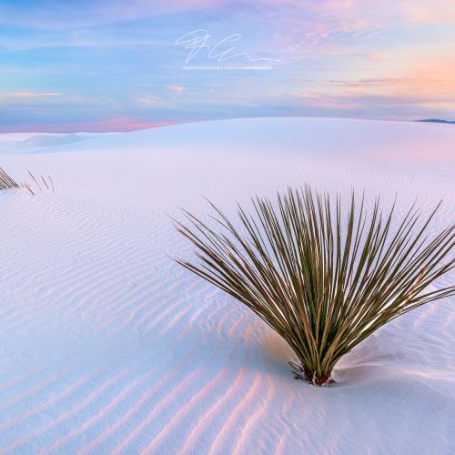 White Dunes by Francesco