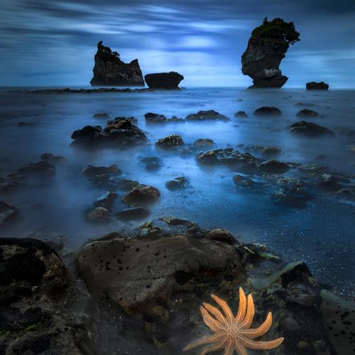 Starfish, Greymouth by momentchris