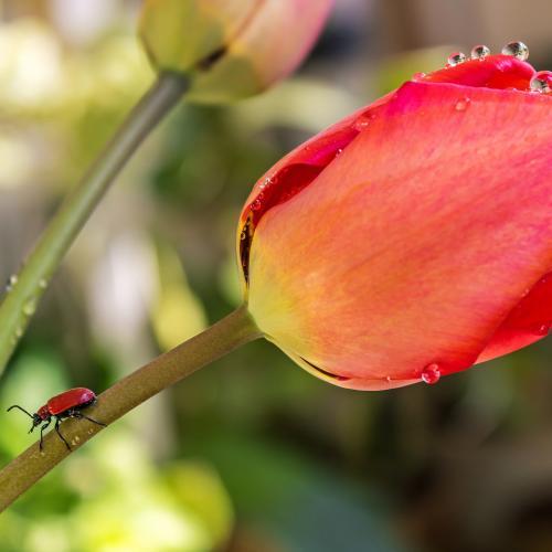 In the light of spring  by Daniel Boca