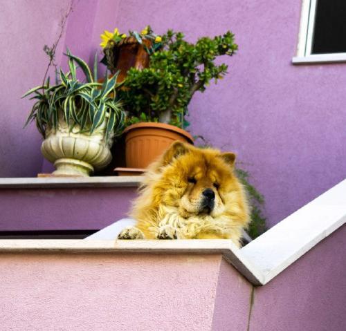 Best doggo in town.  by Esege353