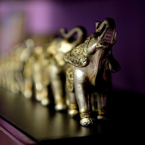 Elephant line by Dragos