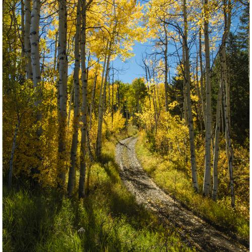 The Road Less Traveled by George