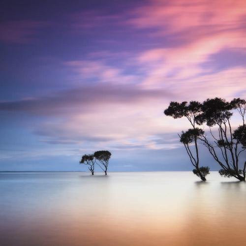 Mangroves by Garry's Vision And Imagination