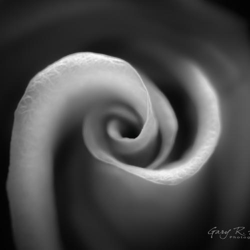 Infinite Beauty by Gary R. Hook