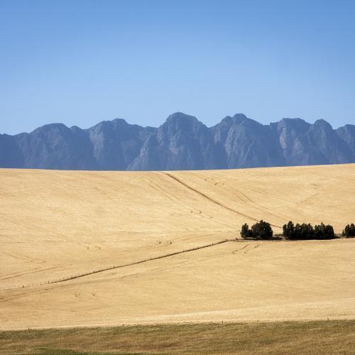 Overberg Farm by Hassner Pepler