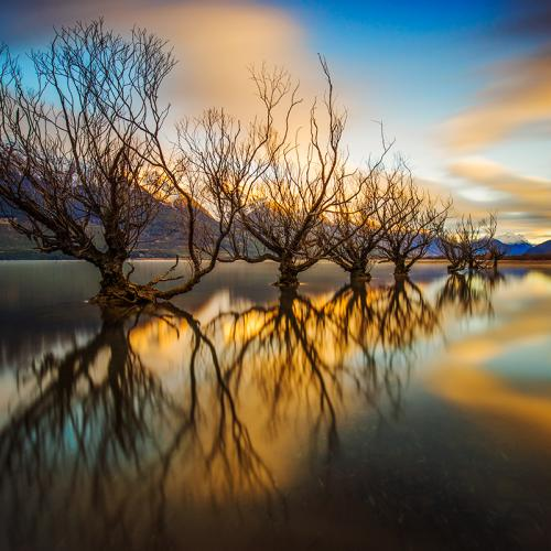 The Willows by Rob