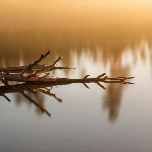Deadfall Reflections by Jared