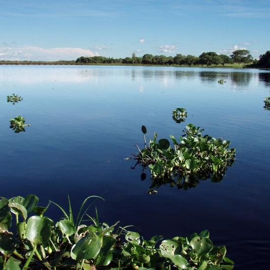 The Pantanal: Earth's Wetlands Wonderland