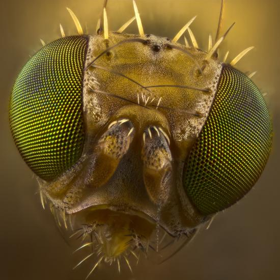 Photo Tip of the Week: Recommended Camera Settings for Sharp, Stunning Macro Photography Images