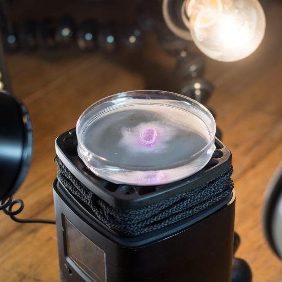 Dissolve – Macro Time-lapse in Motion
