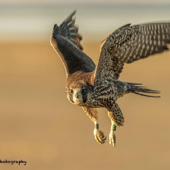 Mastering the Learning Curve of Bird Photography