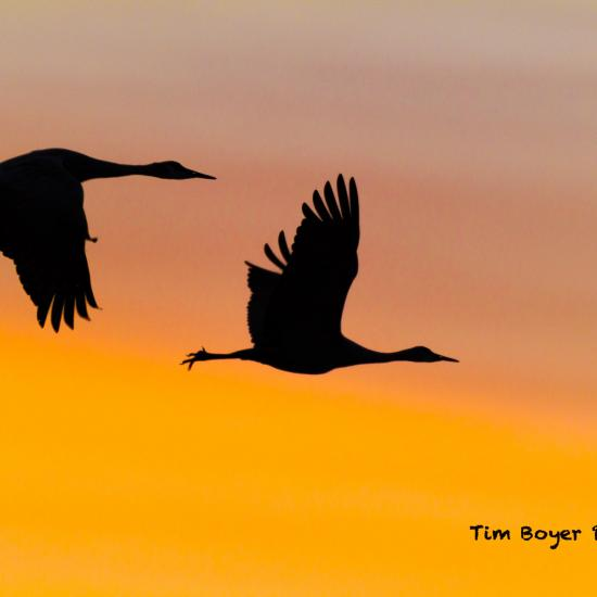 5 Tips for Shooting Beautiful Bird Silhouettes