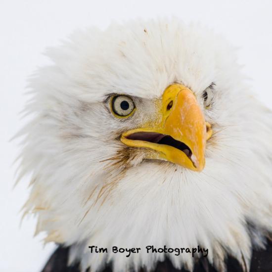 7 Ways to Get a Sharper Bird Image