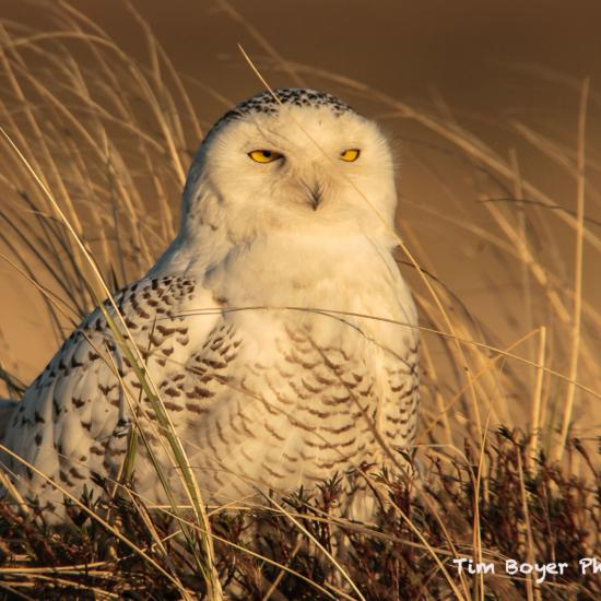 Seven Common Mistakes in Bird Photography