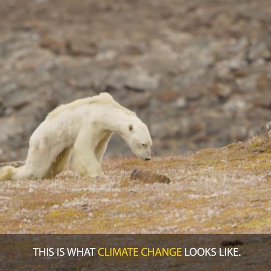 Nat Geo Walks Back Claims That Viral Photo Showing Starving Polar Bear is Linked to Climate Change