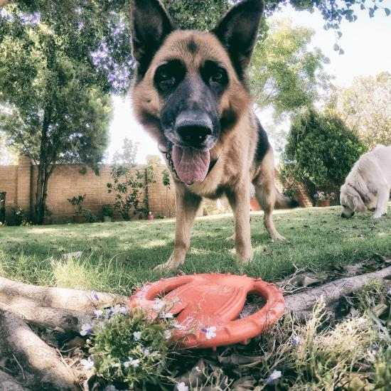 Dog Runs Off With GoPro, Proves She's the Next Great Filmmaker