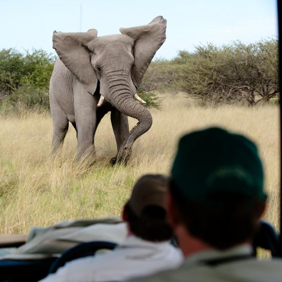 German Tourist Trampled to Death While Photographing Elephants