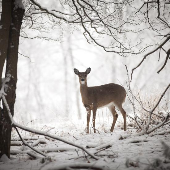 Finnish Photographer Shares Secret to Magnificent, Wintry Wildlife Photos
