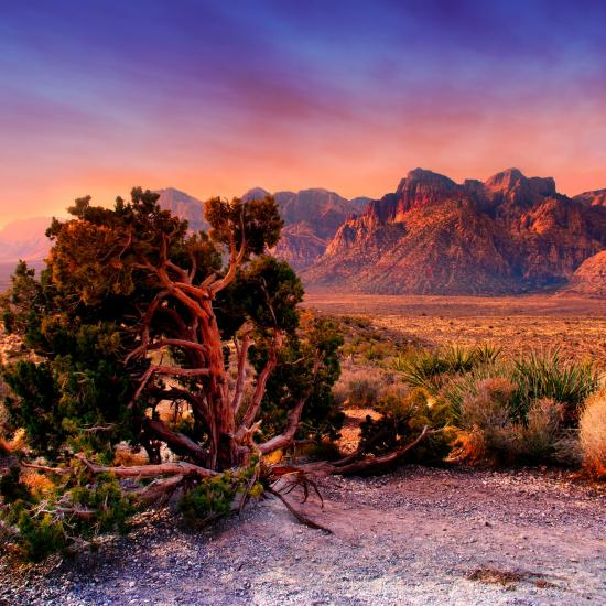 Nevada Photography and Travel Guide - Las Vegas Area