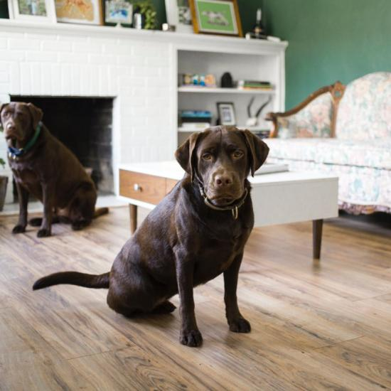 Watch 2 Labs Save Their Owner After a Stroke