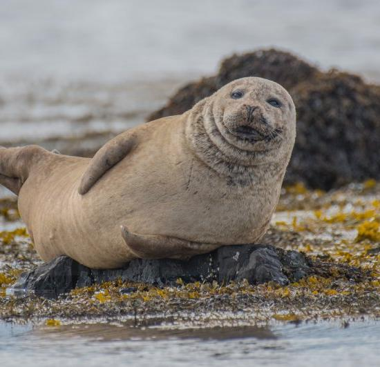 Researchers Looking for Owner of USB Photos Found in Seal's Poop