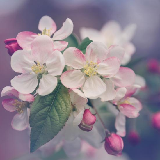 Spring Flower Photography Tips