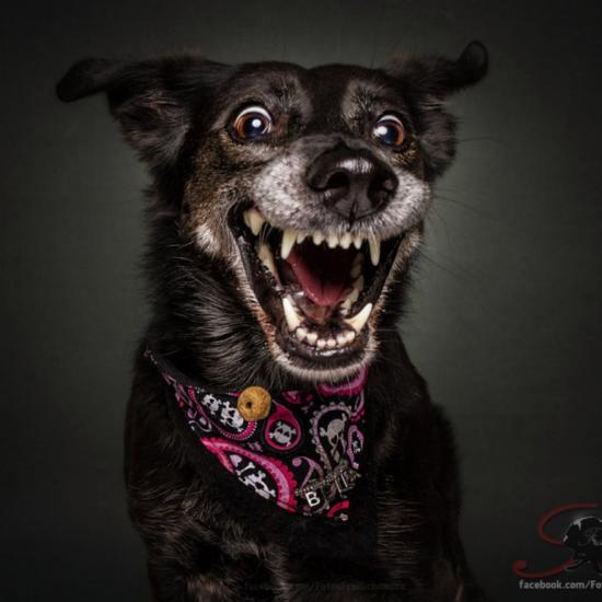 20 Photos of Dogs Catching Treats That Showcase Their Giant Personalities
